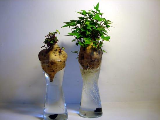 Immagine che contiene interni, tavolo, vaso, fiore  Descrizione generata automaticamente