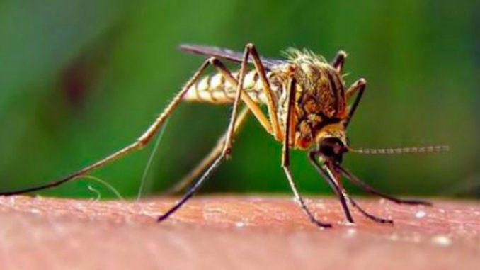 Zanzare portatrici di Coronavirus: la risposta della scienza