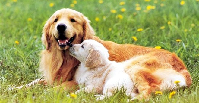 Animali a 4 zampe: anche loro come gli umani soffrono delle crisi adolescenziali?