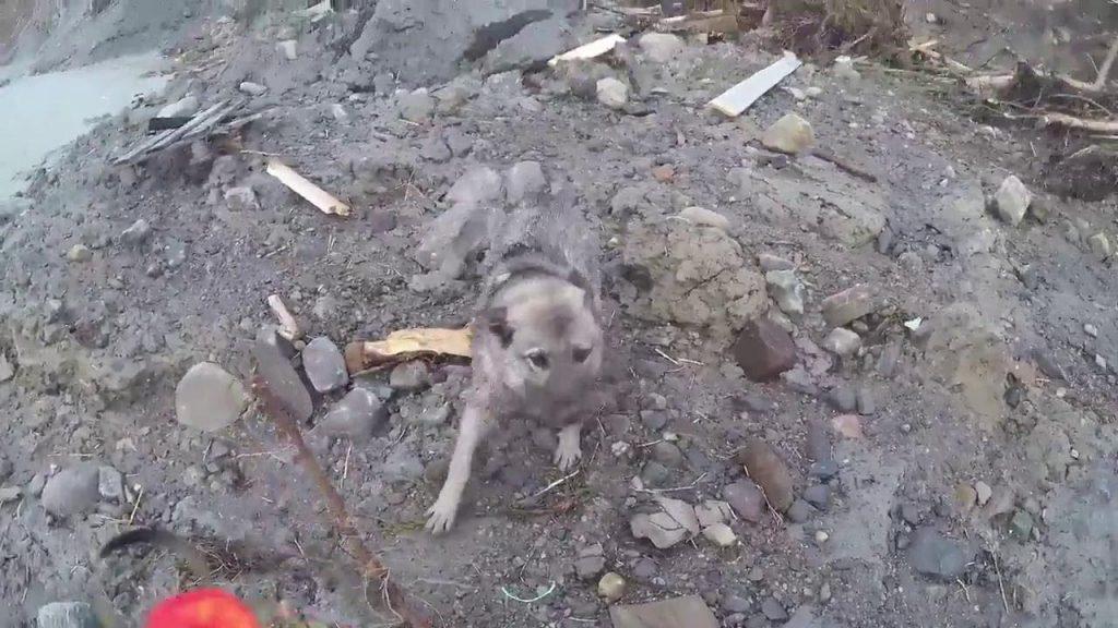 Norvegia: rimasto in vita un cucciolo dopo essere stato 'portato' da una mareggiata