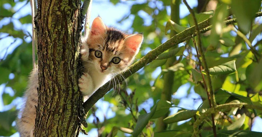 Gucci, il gattino ritrovato dopo 12 anni grazie al microchip