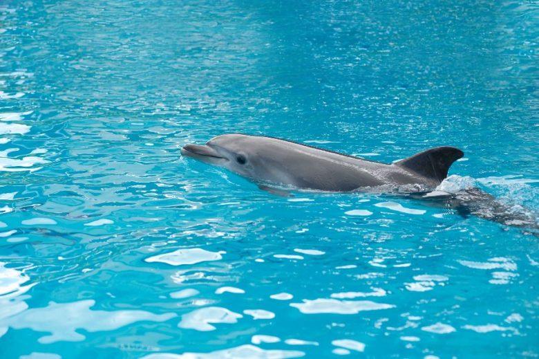 Creato il primo delfino robot: ecco i dettagli
