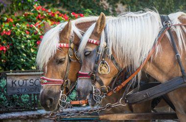 Grecia, decisione storica:vietata macellazione dei cavalli