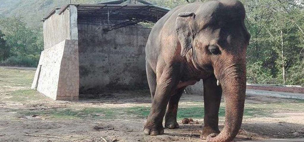 Pakistan: un elefante liberato dopo 35 anni, pronto per essere trasferito